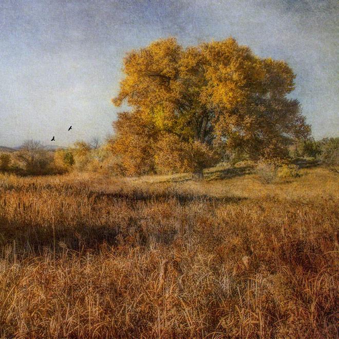 Autumn Rapture - Archival Pigment Print on Canvas - 30 x 30 inches