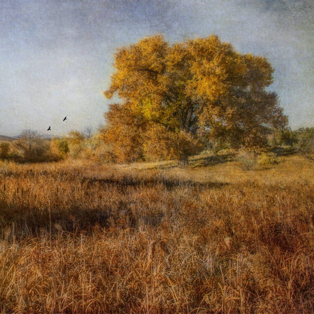 Autumn Rapture - Archival pigment print on canvas - 24 x 24