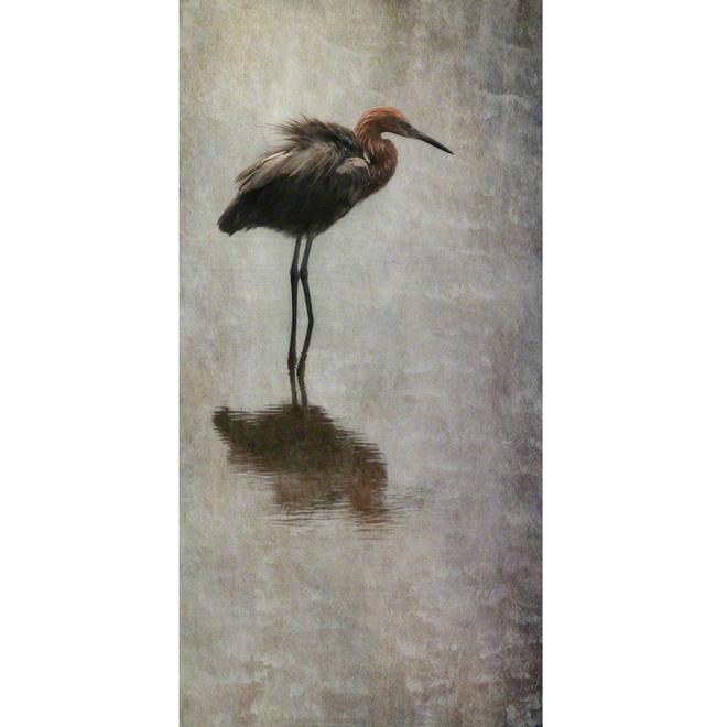 Reddish Egret - Archival Print on Aluminum - 20 x 10 inches