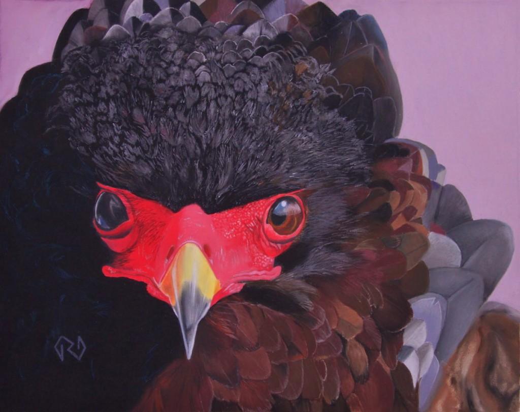 Bateleur Eagle - Pastel - 12 x 15