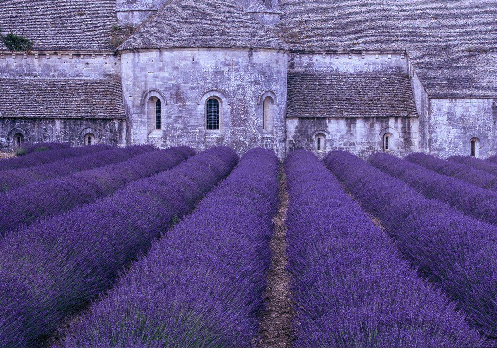 Lavender Abbey - 60 x 40