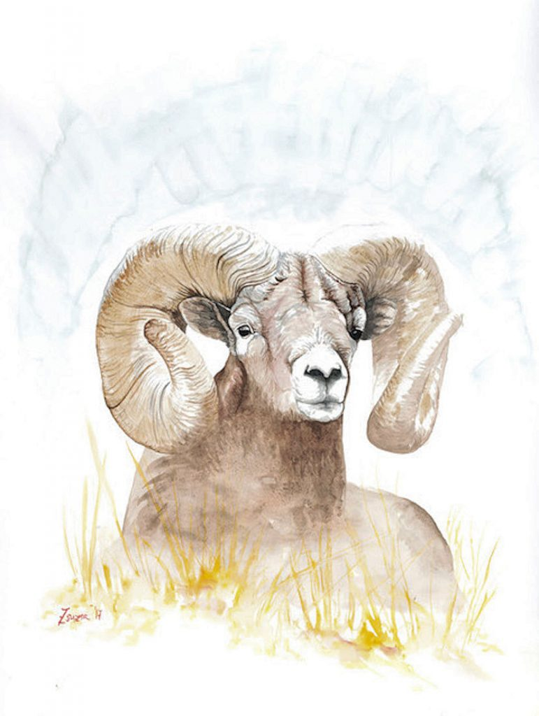 Golden Ram - Watercolor - 24 x18