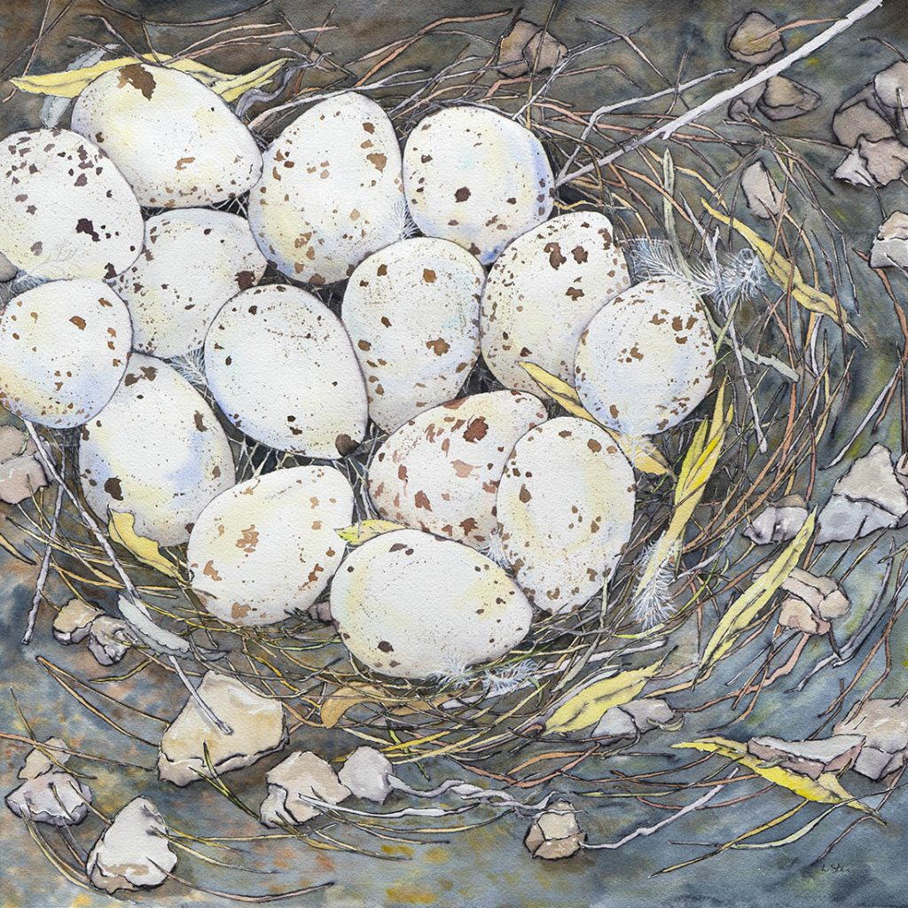 Abundance / Gamble's Quail Nest - Watercolor and Ink - 18 x 18