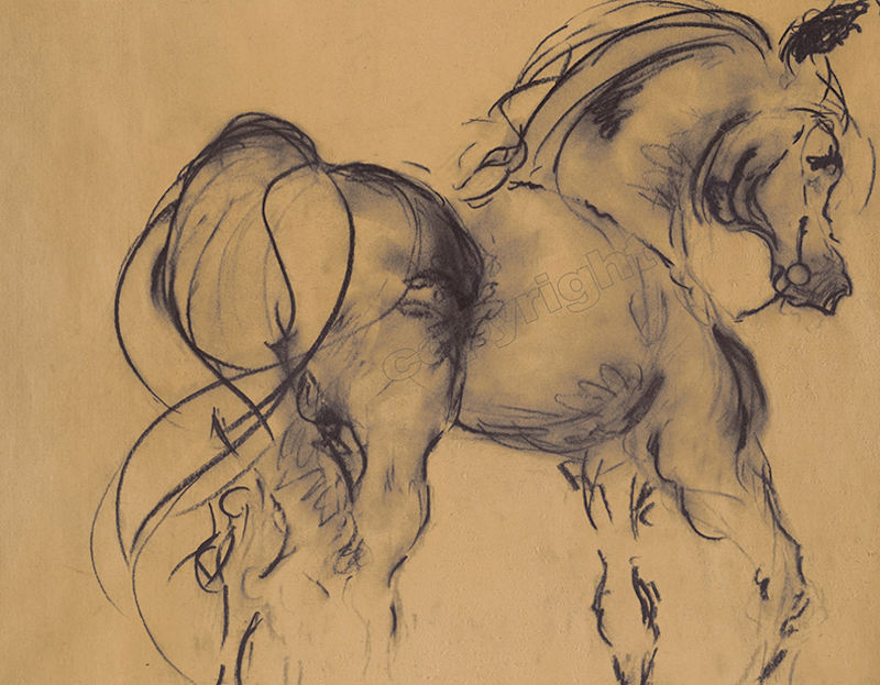 Horse Study 7 -- Charcoal on paper -- 18 x 12